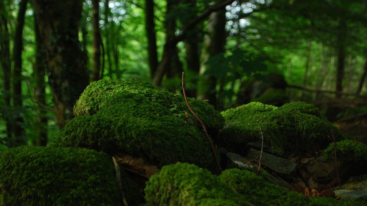 Sol forestier avec de la mousse