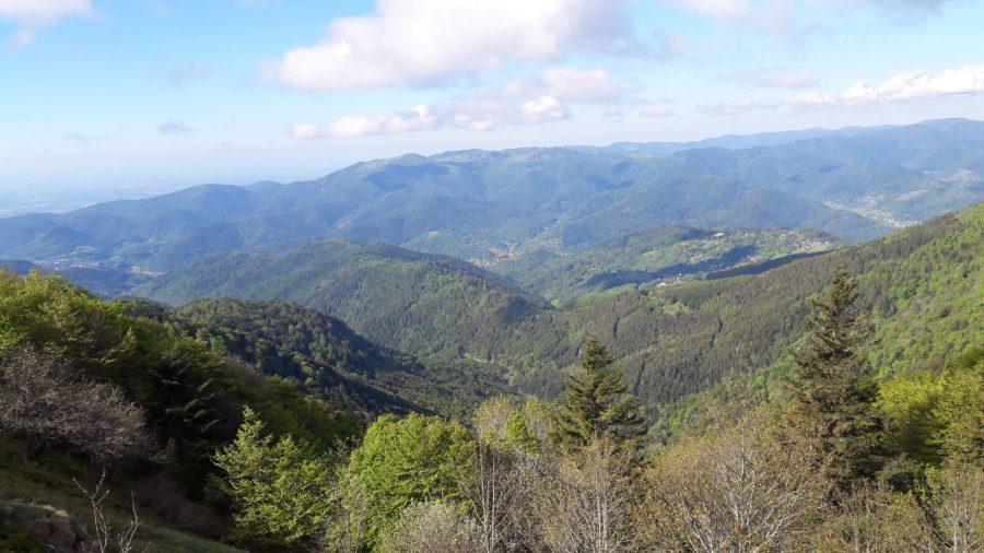 Paysages dans les Vosges