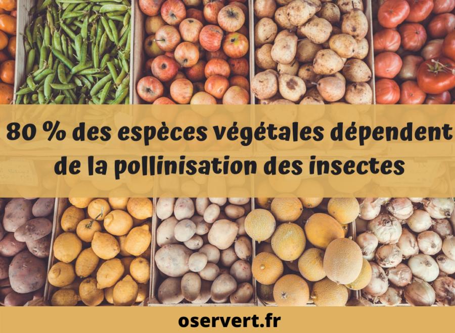 abeilles insectes pollinisateurs responsables de la pollinisation des vegetaux