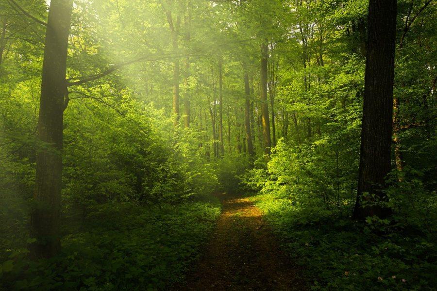 Nature à protéger