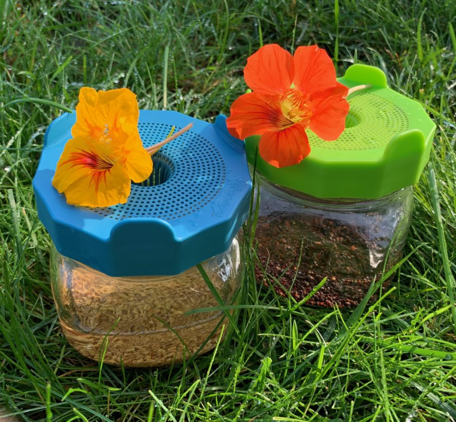 Deux germoirs avec des graines avant de les faire pousser