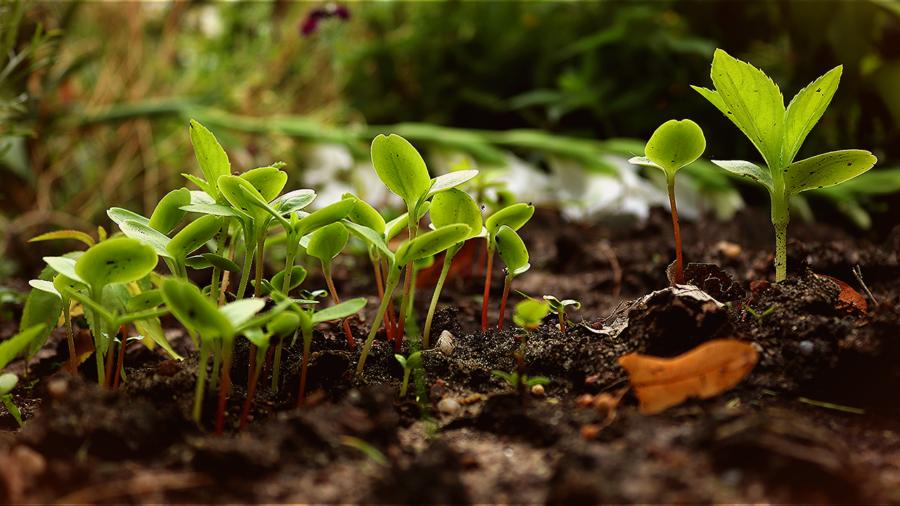 Des pousses dans un jardin, une des idées écologiques les plus impactantes